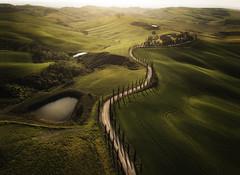 Baccoleno (Dany Eid) Tags: italy tuscany landscape sunset green travel location drone lines europe high angle cypress tree fields dji mavic aerial