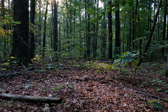 View From Our Tent (Ozarks Walkabout) Tags: berrymantrail marktwainnationalforest gsa missouri forest trees fujifilmxe2s solareclipse2017 ozarktrail backpacking potosi unitedstates us