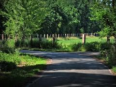 Grüner Weg (W@llus2010) Tags: strase weg grün landschaft