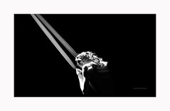 Dancing in the dark © Nicola Roggero (Nicola Roggero) Tags: nikon 7200 85mm dance circus black jump 18 nicolaroggero cirko blackwhite iso sport light cirkovertigo vertigo circo