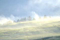 Burning Off (hecticskeptic) Tags: yellowstone yellowstonenationalpark markamorgan spring 2018 may bison fog