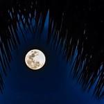 Tropical Moon thumbnail