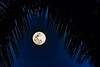 Tropical Moon (Charles Patrick Ewing) Tags: landscape landscapes sky skies night tree trees tropical tropics palm palms lowlight darkenss beautiful new everything all fave faves favorite blue midnight nature natural outdoor moon life photo photography flick flickr best art artistic nikon