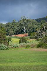 Australia_2018-159.jpg (emmachachere) Tags: subtropical trees hike waterfall boatride springbrook australia rainforest kanagroo animals koala brisbane boat lonepinekoalasanctuary