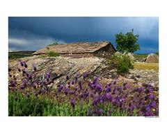 (david Ramalleira) Tags: davidramalleiraphotography davidramalleira paisaje landscape landscapes naturaleza natureart naturephotography naturesfinest naturesart natura