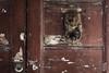 Crusty Pharaoh Knocker (Corbicus Maximus) Tags: knocker door rusty crusty italy corinaldo marche nikon d7200 18140mm lock chipped paint pharaoh cracked