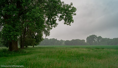 Umore Park (Lzzy Anderson) Tags: minnesota unitedstates us rosemount rain storm mist fog green abandoned woods forest tree clouds sky