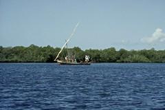 Dhow boat cruising in Mangrove canal in Lamu, Kenya (yhila) Tags: transport lamu kenya forest