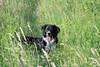 Compagnon de balades / randos (Pautho) Tags: chien dog ami friend randonnee