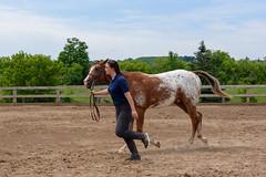 JBC_5146.jpg (Jim Babbage) Tags: krahc horseshow appaloosa horses 2018