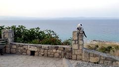 γάτα (erix!) Tags: cat γάτα katze afithos kassandra animal tier mauer wall sea mediterranean mittelmeer griechenland