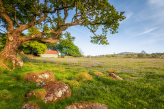 Emsworthy Barn (Rich Walker75) Tags: dartmoor devon landscape landscapes landscapephotography landmark tree trees field mire sky grass bluebells canon efs1585mmisusm england eos eos80d