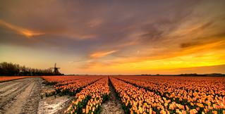 Classic Dutch landscape.