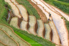 _J5K0859.0617.Lao Chải.Mù Cang Chải.Yên Bái. (hoanglongphoto) Tags: asia asian vietnam northvietnam northwestvietnam landscape scenery vietnamlandscape vietnamscenery terraces terracedfields transplantingseason sowingseeds hillside people landscapewithpeople canon canoneos1dsmarkiii hdr tâybắc yênbái mùcangchải phongcảnh ruộngbậcthang ruộngbậcthangmùcangchải mùacấy đổnước người phongcảnhcóngười sườnđồi mùcangchảimùacấy canonef70200mmf28lisiiusm ricceterracedinvietnam terracedfieldsinvietnam thehmong ngườihmông abstrat curve trừutượng đườngcong laochải
