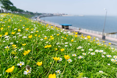 Colwyn Bay (wounderful0) Tags: bay sea nature lanscape flowers beautiful light yellow white grass blue sky