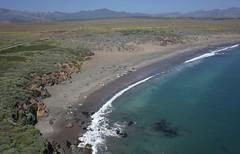 The Elephant Seals of Piedras Blancas (El Kite Pics) Tags: kap kite aerial california piedrasblancas elephantseals seal seals usa hearstcastle