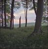 copse (steve-jack) Tags: hasselblad 501cm 80mm cb fuji reala 100 film 6x6 120 trees beech wood tetenal c41 kit epson v500