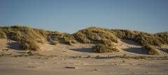 Dunes / Langeoog (jkiter) Tags: landschaft dünen natur deutschland langeoog pflanze nordsee dünengras germany landscape nature outdoor dunegras northsea plant