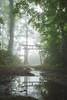 2703 (Keiichi T) Tags: 木 canon tree light eos water 日本 green forest 森 リフレクション 靄 水 朝 6d reflection morning fog japan 光