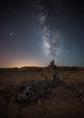 Time is relative... (Alex Savenok) Tags: paranriver milkyway milkywaygalaxy stars stacking desert arava israel israelnature sky nightsky nightscape nightlight astrophoto tree mounts night samyang 14mm d610