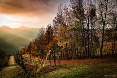 Autunno in collina - Autumn in the hills (alfapegaso) Tags: