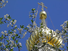 Blossom at Novospassky monastery (Moscow) (janepesle) Tags: spring moscow russia blossom monastery nature природа цветение цветы москва город