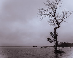 Lonely Tree [Explore] (Coast to Coast and In Between) Tags: tree water river potomacriver kayak blackandwhite bw marsh virginia sony clouds cloudyday darkwater roots sky landscape overcast