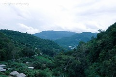 In the embrace of the mountains. (natureflower) Tags: mountains trees green chiangmai hilltribe village rainy season thailand rain forest