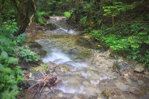 Forest Stream Summer/Erdő Patak Nyár