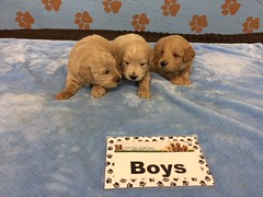 Roxie Boys pic 3 6-10