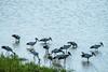 GSCF6916 (Deepak Kaw) Tags: kaziranga assam india birds water composition colours fujifilm