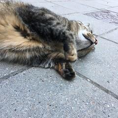 (hannemiriam) Tags: catbliss chin furry cozy play animal pet urbancat tabby shecat chat katze kat lunathecat feline iphone