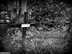 "Sortie Urbex Baptisée ""Mortuary Project"" du 2018.05.21 (Laurentrekk Photographies) Tags: urbex urbexaquitaine urbexfrance urbexgironde urbexers cemetery abandonned abandonnedplace cimetiere"