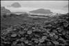 Sutro Bath ruins (ADMurr) Tags: sf weeds black white bw leica m6 kodak 400 dac767