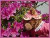 """""""Sissy enjoys smelling flowers at a children's park in Hayama, Japan. And, this is her first time to do it!"""" (martian cat) Tags: ribbet macro teddybearsinjapan© ©martiancatinjapan ©teddybearsinjapan allrightsreserved© teddybearsinjapan teddybearsinjapan☺ ☺teddybearsinjapan ©allrightsreserved martiancatinjapan© teddybear teddybears collectibles hobbies ☺dogsandpuppiesinjapan ©dogsandpuppiesinjapan dogsandpuppiesinjapan© dogsandpuppiesinjapan ©puppydogsinjapan puppydogsinjapan© puppydogsinjapan ☺allrightsreserved allrightsreserved ☺martiancatinjapan martiancat martiancat© ©martiancat martiancatinjapan creativity collectible hayama japan park azalea"""
