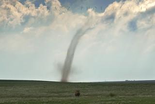 Moo Tornado Mooooo!!!