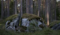 Boulder (ffigueiredo17) Tags: forest boulder iceage eesti estonia trees rock woods wild nature moss rocks boulders kasmu