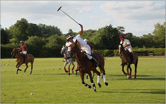 The Sport Of Kings (Mabacam) Tags: 2018 london richmond ham hampoloclub poloplayers poloponies mallet chukkah sport riding skill sportofkings