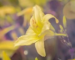 My Flower Gently Weeps (Wade Brooks) Tags: 2017 dukegardens flowers june dukegardensflowers