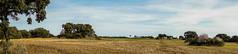 LA ALCARRIA MADRILEÑA (bacasr) Tags: panorámica paisaje landscape villardelolmo hicking way laalcarria fields panorama españa comunidaddemadrid campos senderismo spain rural countryside