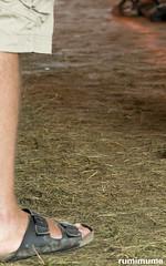 Summerfolk #42 (2017) (rumimume) Tags: potd rumimume 2017 niagara ontario canada photo canon 80d sigma summerfolk music craft folk group 42 festival ownesound greybruce summer outdoor beach fun night concert livemusic 2018