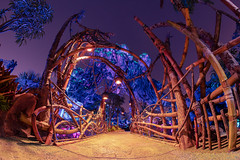 Animal Kingdom - Bridge to Another Land (Jeff Krause Photography) Tags: animal avatar blacklight bridge disney floating glow kingdom lighting night pandora park pathway pond wdw walk world exotic mountain theme kissimmee florida unitedstates us