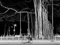 Ghost Rider (tourtrophy) Tags: banyantree oahu hawaii waikiki cyclist bikerider samyang35mmf28 sonya7rii