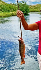 My catch of the day (photographed by my hubby) (peggyhr) Tags: peggyhr brooktrout lake hills clouds sky red white blue green flyrod sp img1971ja bluebirdestates alberta canada