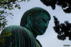 Kamakura Great Buddha Daibatsu (smellerbee) Tags: daibatsu buddha statue copper ancient kamakura tokyo japan fuji fujifilm fujifilmxt20 colour color digital outdoor religion buddhism