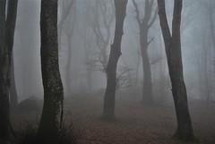 Fog (Simone Pomi) Tags: fog nebbia nikon atmosfera bosco alber viterbo soriano nel cimino mood tumbrl woods alone