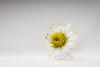 White (eosfoto) Tags: macro sigma tuin