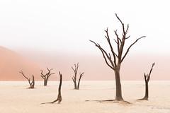 Lifeless? (Anais Iranzo) Tags: fog trees desert deadvlei namibia canon anais iranzo