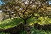 Dehesa extremeña. (Javi Bermudez) Tags: d7200 nikon badajoz extremadura españa spain tokina 11mm paisaje landscape