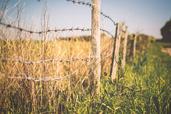 The Wire (Craperture91) Tags: fence wire sun wood texture nature travel blur focus plants soft
